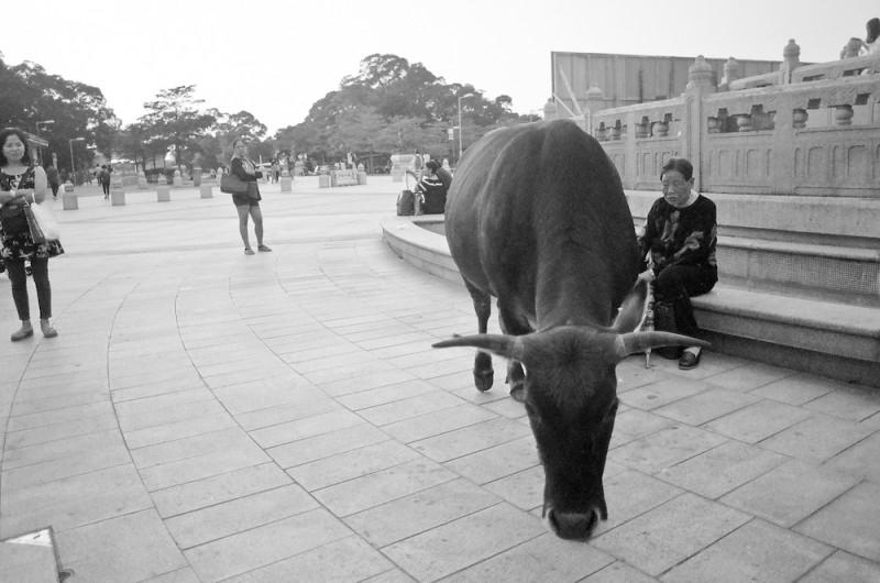 kjrsten madsen big buddha hong kong-013 copy
